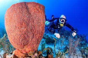 Aquatic Sponges