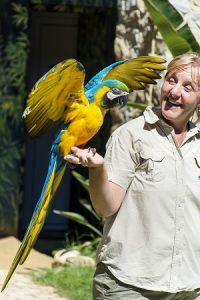 Charlie The Macaw