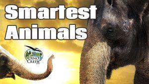Smartest Animals