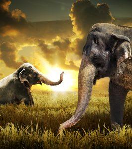 How Smart Are Elephants