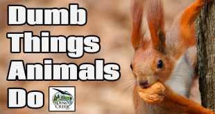 Dumbest Animals Ever