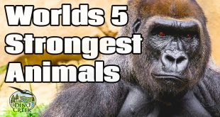 5 Strongest Animals