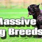 5 of the Largest Dog Breeds