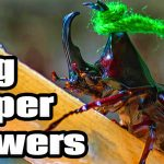 5 Bug Superpowers
