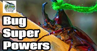 Bug Super Powers 2