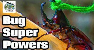 Bug Super Powers 2