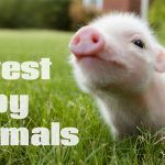 5 Cutest Animal Babies