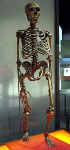 226px-neanderthalensis