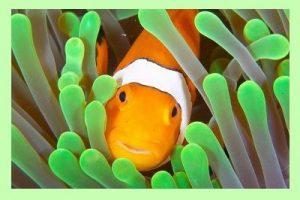 Clownfish Can Change Sex