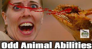 Strange Animal Abilities