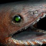 5 Crazy Animals From Deep Sea
