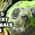 5 Oldest Animals Ever