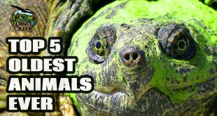 Oldest Animals Ever