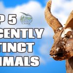 5 Animals Hunted To Extinction