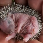 5 Cutest Animals Ever To Melt Your Heart