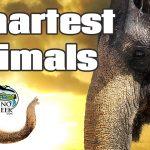 5 Smartest Animals