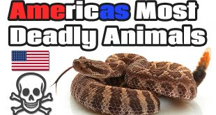 Americas Most Dangerous Animals