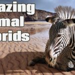 8 Craziest Animal Hybrids