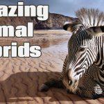 8 Craziest Animal Hybrids