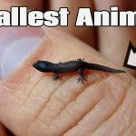 5 Smallest Animals in the World