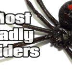 5 Deadliest Spiders