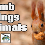 Dumb Things Animals Do (Worlds Dumbest Animals)
