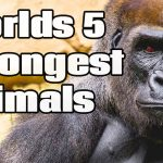 5 Strongest Animals In The World