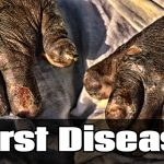 5 Worst Diseases Imaginable
