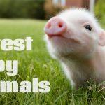 5 Cutest Animal Babies